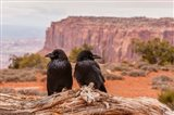 Pair Of Ravens On A Log