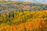 Manti-La Sal National Forest In Autumn, Utah