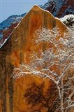 Snow Covered Tree In Front Of Red Rock Boulder, Utah