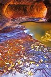 The Subway Along North Creek With Fallen Leaves, Utah