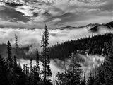 Olympic National Park, Washington (BW)