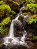 Creek In Sol Duc Valley, Washington