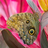 Close-Up Of An Owl Butterfly