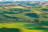 Farmland Viewed From Steptoe Butte, Washington State