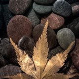 Maple Leaf On Rocks