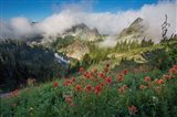Indian Paintbrush Landscape Near The Tatoosh Range