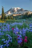 Wildflowers And Mt Rainier At Mazama Ridge