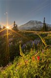 Sunset At Mazama Ridge, Washington