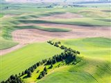 Aerial Shot In The Palouse Region Of Eastern Washington