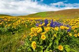 Spring Wildflowers Cover The Meadows At Columbia Hills State Park