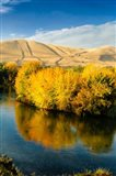 Autumn Color Along The Yakima River