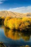 Autumn Color Along The Yakima River