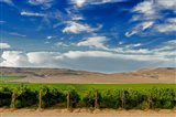 Mattawa Vineyard On The Wahluke Slope