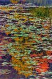 Lily Pads And Autumn Reflections At Babcock State Park