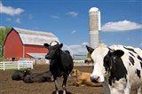 Cows, red barn, silo, farm, Wisconsin