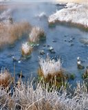 Frost Along White Creek, Wyoming