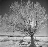 Lone Ice Tree (BS)