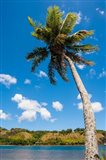 Umatac Bay Palm Tree, Guam