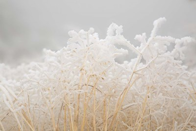 Dried Winter Grasses Covered In Hoarfrost Poster by Jaynes Gallery / Danita Delimont for $47.50 CAD