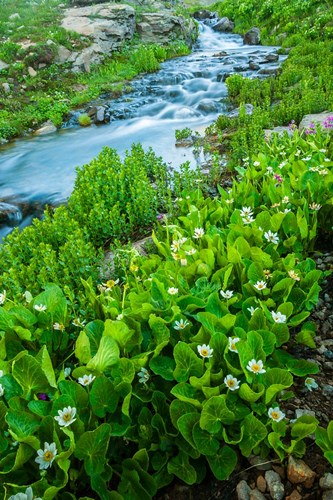 Stream Cascade With Spring Marigolds, Colorado Poster by Jaynes Gallery / Danita Delimont for $42.50 CAD