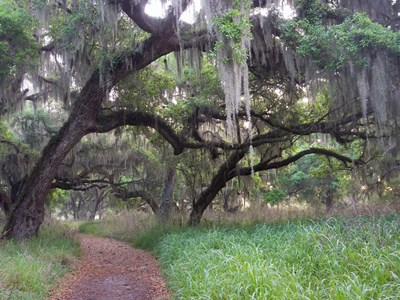Trail Beneath Moss Covered Oak Trees, Florida Florida Poster by Sheila Haddad / Danita Delimont for $38.75 CAD