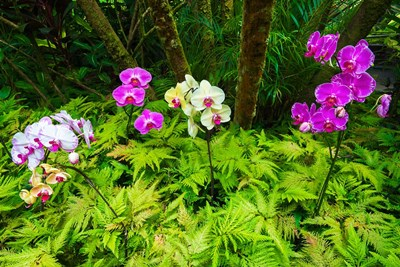 Orchids At The Hawaii Tropical Botanical Garden Poster by Russ Bishop / DanitaDelimont for $53.75 CAD