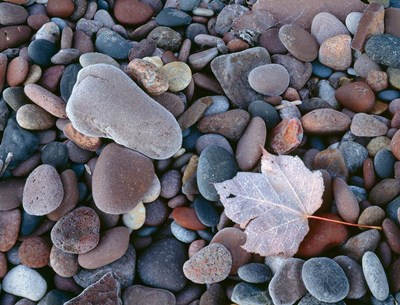 Maple Leaf And Rocks Along The Shore Of Lake Superior Poster by John Barger / DanitaDelimont for $91.25 CAD