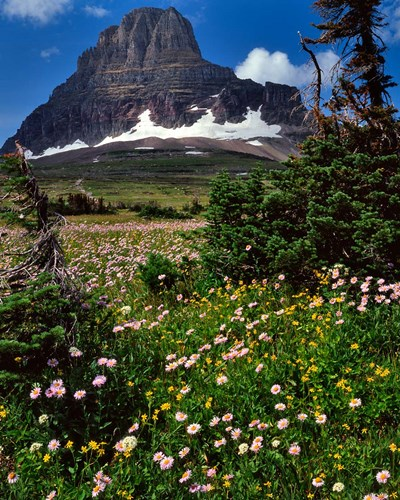 Clements Mountain, Glacier National Park, Montana Poster by Jaynes Gallery / Danita Delimont for $70.00 CAD