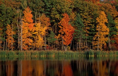 Wetlands in Fall, Peverly Pond, New Hampshire Poster by Jerry & Marcy Monkman / Danita Delimont for $65.00 CAD