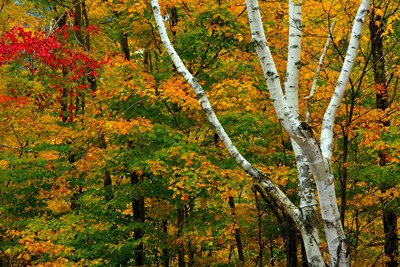 Autumn at Ripley Falls Trail, Crawford Notch SP, New Hampshire Poster by Michel Hersen / Danita Delimont for $77.50 CAD