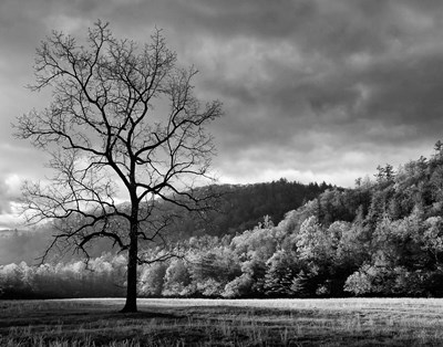 Storm Clearing At Dawn In Cataloochee Valley, North Carolina (BW) Poster by Ann Collins / DanitaDelimont for $56.25 CAD