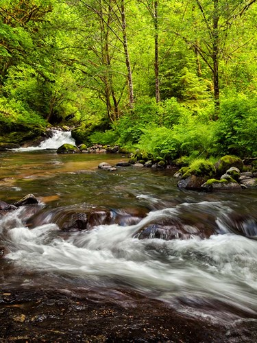 Siuslaw National Forest, Sweet Creek, Oregon Poster by Ann Collins / DanitaDelimont for $51.25 CAD