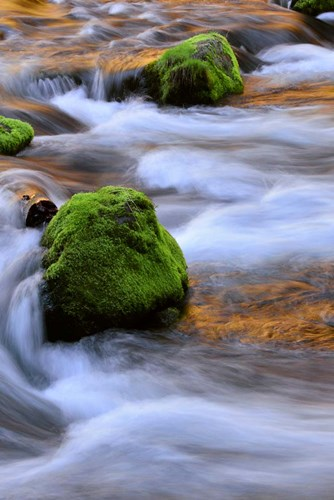 Mckenzie River Flowing Over Moss-Covered Rocks, Oregon Poster by Jaynes Gallery / Danita Delimont for $60.00 CAD