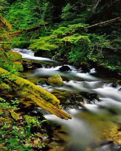 Still Creek, Oregon Poster by Jaynes Gallery / Danita Delimont for $70.00 CAD