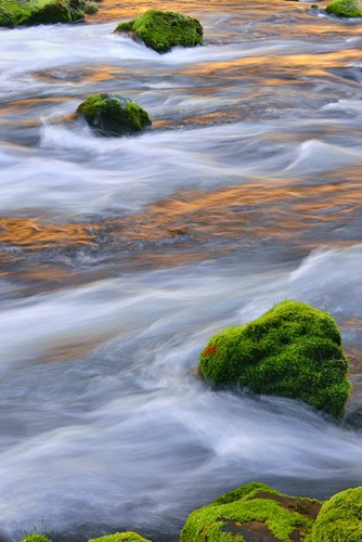 Mmoss-Covered Rocks In The Mckenzie River, Oregon Poster by Jaynes Gallery / Danita Delimont for $60.00 CAD