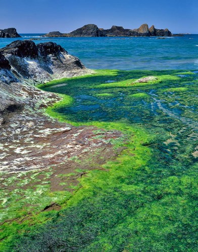 Rock Formations And Algae At Seal Rock, Oregon Poster by Jaynes Gallery / Danita Delimont for $62.50 CAD