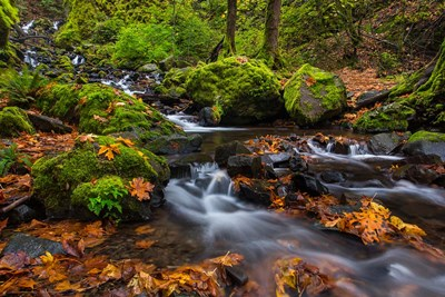 Autumn Color Along Starvation Creek Falls In, Oregon Poster by Chuck Haney / Danita Delimont for $47.50 CAD