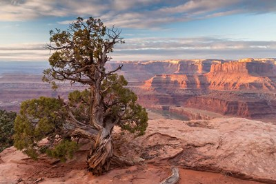 Sunrise At Dead Horse Point State Park, Utah Poster by Jaynes Gallery / Danita Delimont for $42.50 CAD