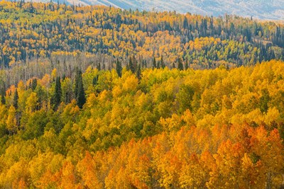 Manti-La Sal National Forest In Autumn, Utah Poster by Jaynes Gallery / Danita Delimont for $53.75 CAD