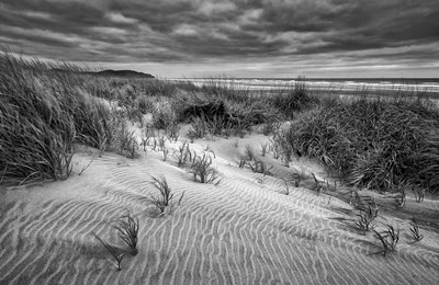 Long Beach, Washington (BW) Poster by Ann Collins / DanitaDelimont for $67.50 CAD