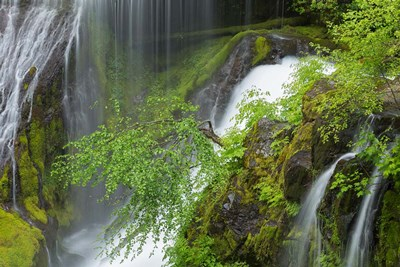 Spring Scene At Panther Creek Waterfall, Washington State Poster by Jaynes Gallery / Danita Delimont for $42.50 CAD