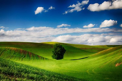 Rolling Wheat Field Landscape With A Lone Tree Poster by Terry Eggers / Danita Delimont for $42.50 CAD