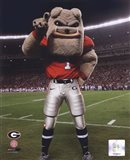 The Univserity of Georgia Bulldogs Mascot 2007