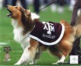 Reveille VII Texas A&M Aggies Mascot 2005