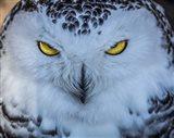 Evil Owl II