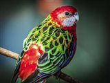 Colorfull Bird
