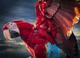 Ara Wings