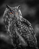 Wise Owl 2  Black & White