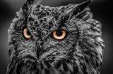 Wise Owl 5 Black & White