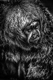 Little Monkey 4 Black & White